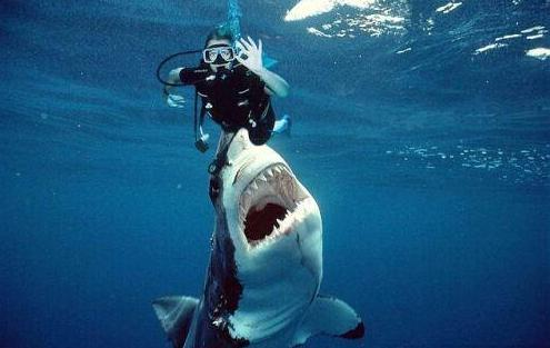 requins2.jpg